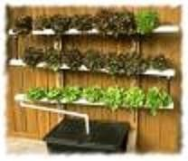 Hydroponics project-ideas