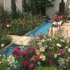 hampton court flower show 2015 - Hampton Court Flower Show Garden Of Paradise This is beautiful Hampton Court Flower Show, Rhs Hampton Court, Paradise Garden, Lotus Design, Courtyards, Amazing Gardens, Garden Plants, Planting Flowers, Landscape