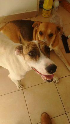 Adopción Mascotera #perros #mascotas #AdopciónResponsable nueva entrada en el blog de difusión sobre adopción de mascotas, buscar lugares de tránsito, etc. Dogs, Animals, Pet Dogs, Entryway, Thoughts, Lugares, Animaux, Doggies, Animal