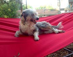 Lazy Sunday chillin' in the hammock.