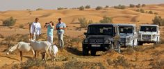 Explore the sweeping sand dunes of Dubai in style with an exciting luxury desert safari tour. Places To Travel, Places To Visit, Desert Safari Dubai, Fun Deserts, Travel Advisory, Dubai City, Dubai Travel, Aarhus, Travel Deals