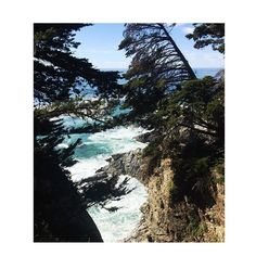 just can't keep these pictures for myself only 📸 #nature #travellover #17miledrive #pch #highway1 #california #bigsur #calocals - posted by Stancheva Milena D https://www.instagram.com/stancheva.milena - See more of Big Sur, CA at http://bigsurlocals.com
