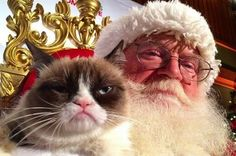 Grumpy Cat lovers, rejoice (or don't)! Grumpy Cat now has a Christmas song for you to sing along to this holiday season! Grumpy Cat Quotes, Grumpy Cat Humor, Grumpy Kitty, Cat Memes, Funny Memes, Grumpy Cat Christmas, Christmas Animals, Merry Christmas, Christmas Things