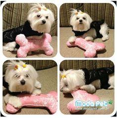 MEU PET NA MODA   Essa é a Sophie, ela fez diversas poses com esse travesseirinho lindo em formato de osso! #meupetnamoda