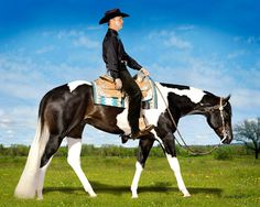 On pinterest western pleasure american paint horse and paint horses