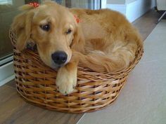 Almost too big for this basket. :O)