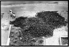 Laster kippen Braunkohle zum Heizen direkt auf die Straße. (Am Treptower Park, Berlin, 1990)