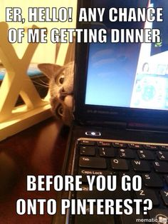 Do Not Disturb These 15 Cats Who Are Currently Obsessed With Their Dinner - World's largest collection of cat memes and other animals Funny Animal Pictures, Funny Animals, Cute Animals, Funniest Animals, Crazy Cat Lady, Crazy Cats, I Love Cats, Cool Cats, Gatos Cats
