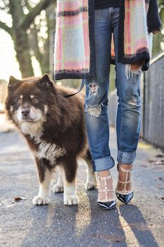 ripped jeans, rockstuds, checks and that puppy face (Finnish Lapphund cuteness)