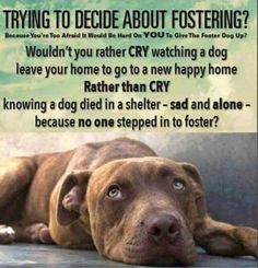Only takes one foster to save many lives!!! Please consider being a foster, lives depend on it!!