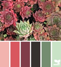 Great site for selecting color schemes