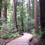 Muir Woods- one of my favorite places to for a day hike in the beautiful California redwoods!