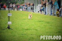 #Hund #Wuff