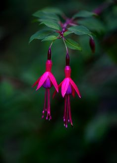 Hang in there... gorgeous colors,  Purple and fuchsia