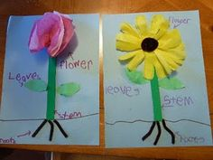 Parts of a Flower: I did a lesson and project just like this with my kids, it really helps them remember the parts of the plant what they do