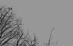 Creative Minimal Wallpapers for Your Desktop Grey Wallpaper Laptop, Minimal Desktop Wallpaper, Macbook Wallpaper, Aesthetic Desktop Wallpaper, Tree Wallpaper, Widescreen Wallpaper, Computer Wallpaper, Wallpaper Powerpoint, Gray
