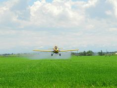 EPA APPROVES DEADLY NEW HERBICIDE .. EARTHJUSTICE RESPONDS | Legal options being explored as approval gives sanction for 2,4-D use on corn . soy crops . [.READ MORE.]