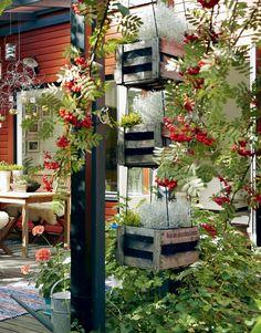 Pihlajapuiden kehystämällä verannalla viihdytään pitkälle syksyyn. Kukkaruukut Minna on hankkinut aikoinaan vanhasta työpaikastaan Kukkakauppa Piia Jaalalta.