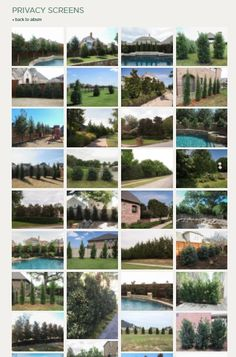The Top Trees for Privacy Screens in Texas / Best privacy screen trees/ Fast Growing Privacy Screen Trees in North Texas / Treeland Nursery Privacy Trees, Privacy Plants, Privacy Landscaping, Trees And Shrubs, Trees To Plant, Screen Plants, Fast Growing Trees, Garden Screening, Texas Gardening