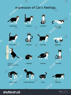 Basic Cat Training Tips for Beginners - meowlogy Cat Body, Cat Hacks, Cat Info, Cat Care Tips, Pet Care, Kitten Care, All About Cats, Facts About Cats, Warrior Cats
