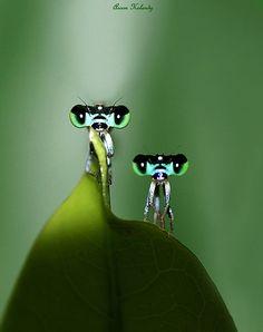 Amigos........... by AroonKalandy. #praying mantis