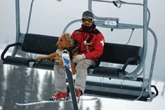 Avalanche Dogs Help with History Lessons | Aspen Daily News Online (Zoot hitches a ride to work)