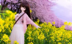 Cherry blossoms and canola flower and ...