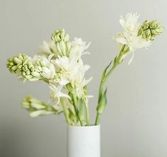 The Night Bloomer- Tuberose - BloomThis Creative Flower Arrangements, Floral Arrangements, Versailles Garden, White Flower Farm, Line Flower, Green Garden, Cut Garden, Indoor Planters, Floral Photography