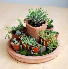 Maceta y macetitas  No Linde - Incremental Mini-Gardens #nolinde #moss…