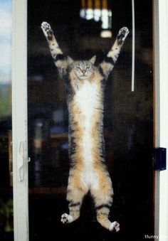 Screen Door Cat..