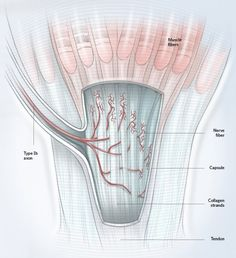 Compression springs are used in an experiment involving the muscles in our hands. Compression Springs, Nerve Fiber, Hand Therapy, Our Body, Collagen, Experiment, Muscles, Bodies, Medicine