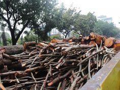 Batang-batang pohon yang dipindahkan di truk