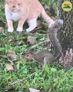 Funny Cute Cats, Cute Cat Gif, Cute Funny Animals, Cute Baby Animals, Funny Animal Memes, Funny Animal Pictures, Animals For Kids, Animals And Pets, Cute Animal Videos