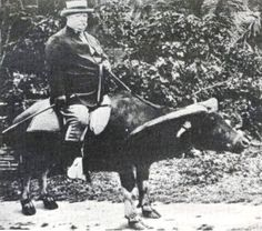 Future American President, William Taft, riding a carabao in the Philippines during the Philippine-American War, 1899-1902