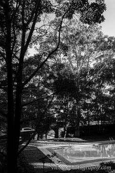 Backyard trees - Project 365 / Day 14 - Victor H Photography