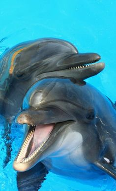Scrolling and I chuckled 😂. J did in his sleep 😂😂😂😂 - Дельфины - Tiere Dolphin Images, Dolphin Photos, Dolphin Art, Amazing Animals, Animals Beautiful, Nature Animals, Animals And Pets, Animals Sea, Photo Dauphin