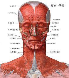 Anatomy 머리