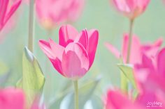 ♥  #flowers #flores