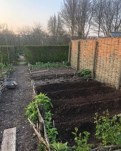"""Monty Don on Instagram: """"First spuds planted - 'Charlotte'"""" Monty Don, Photo And Video, Charlotte, Free Range, Plants, Outdoor, Instagram, Videos, Photos"""