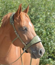 Love the bitless bridle! Most Beautiful Horses, Animals Beautiful, Farm Animals, Cute Animals, Leather Halter, Horse Bridle, Horse Tips, Horseback Riding, Dressage