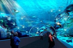 Two Oceans Aquarium, Cape Town. Fun Activities in Cape town South Africa Holidays, Cape Town South Africa, Ocean Aquarium, World Most Beautiful Place, V&a Waterfront, Roadtrip, Travel Deals, Places To See, Tours