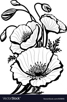 Poppy Drawing by Anna Farba Botanical Illustration Studio in poppy flower drawing Sketch of poppy flowers vector image on Poppy Drawing, Floral Drawing, Flower Sketches, Drawing Sketches, Tattoo Sketches, Tattoo Drawings, Flower Outline, Flower Art, Outline Drawings