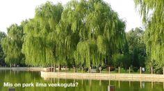 Hiina aias on veekogu...