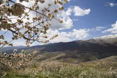 Valle del Jerte, donde florece la Primavera