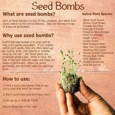spring - right time for seed bombs. spring - right time for seed bombs. Organic Gardening, Gardening Tips, Seed Bombs, Natural Ecosystem, Seed Paper, Evening Primrose, Plant Species, Garden Seeds, Garden Care