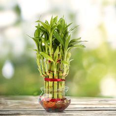 + Plantas
