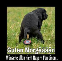 Satire, Haha, Comedy, Funny Pictures, Jokes, Munich, Sports, Animals, Allg