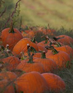 pumpkin patch ~ By debthepicturelady You can almost feel the fall quality of the air in this photo