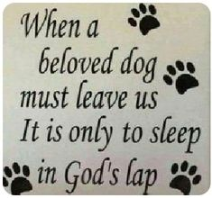 Here is another saying from a friend of my cousins; who's dog they had for Passed. Pet Loss Quotes, Dog Quotes, Bible Quotes, Qoutes, I Love Dogs, Puppy Love, Pet Loss Grief, Loss Of Dog, Dog Poems