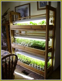 Consider the benefits of indoor gardening especially in the long winter months. Plants inside of the home can actually add decor to your environment as well as add moisture and oxygen to your indoor air. You don't have to add a lot of plants inside of you Indoor Vegetable Gardening, Organic Gardening, Indoor Hydroponic Gardening, Kitchen Gardening, Texas Gardening, Container Gardening, Hardening Off Seedlings, Indoor Greenhouse, Large Greenhouse